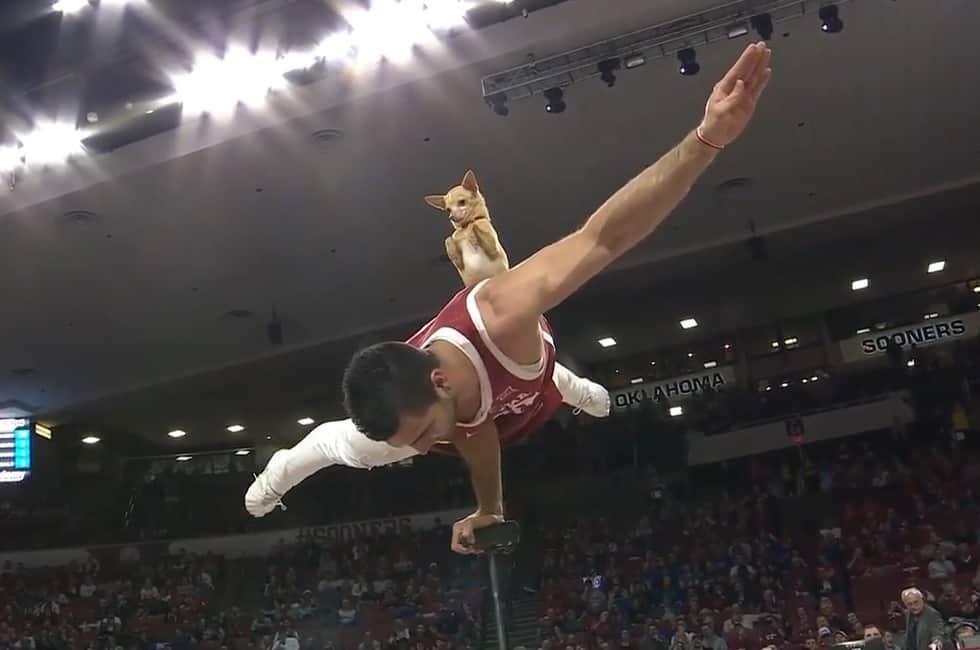 Cane Acrobata Oklahoma Kansas Circus Shot Auburn